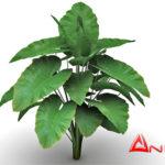 Alocasia 3d model